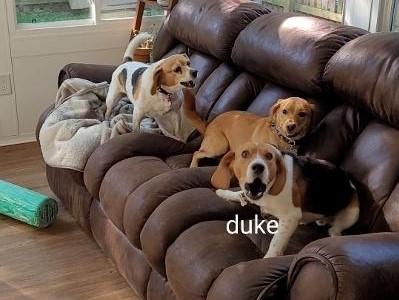 Duke2 1