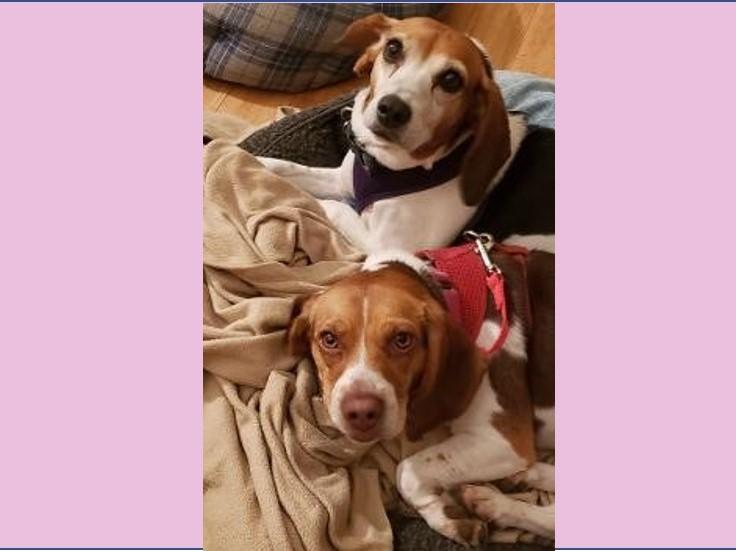 Inga and Sadie5